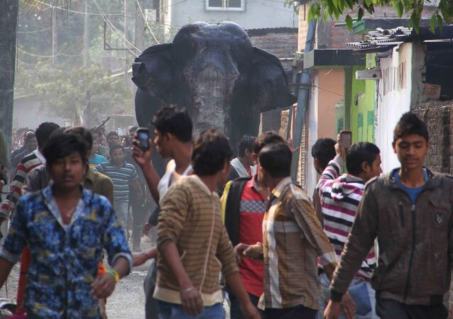 Massive Elephant Wreaks Havoc on Indian Town (PHOTOS, VIDEO)