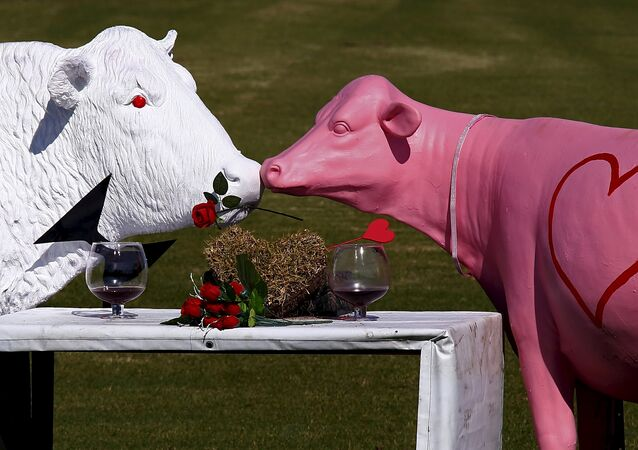 Sculptures in the shape of cows are displayed in a paddock ahead of Valentine's Day on the outskirts of the town of Nowra, south of Sydney, Australia, February 13, 2016