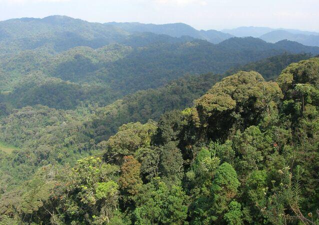Rwanda Rainforest
