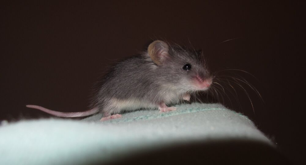 Not-So-Nice Mice: Brussels Says Infrastructure Plan Eaten by Hungry Rodents