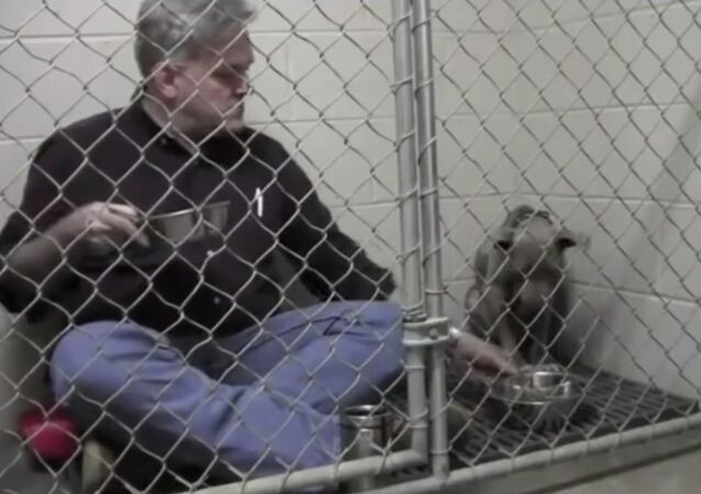 The adorable moment veterinarian comforts a scared, abandoned dog by sitting in its cage and eating