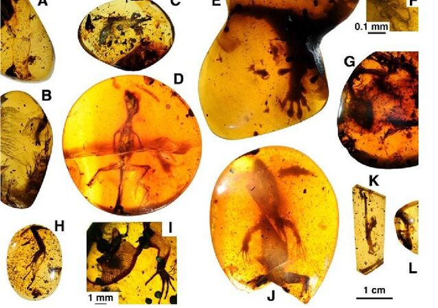 Lizards preserved in mid-Cretaceous Burmese amber