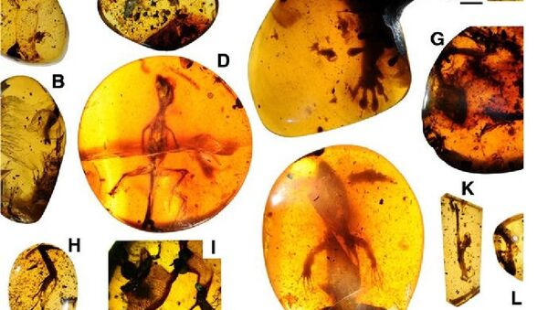 Lizards preserved in mid-Cretaceous Burmese amber - Sputnik International