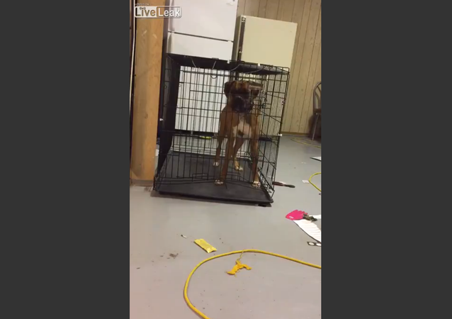 Dog escapes the cage
