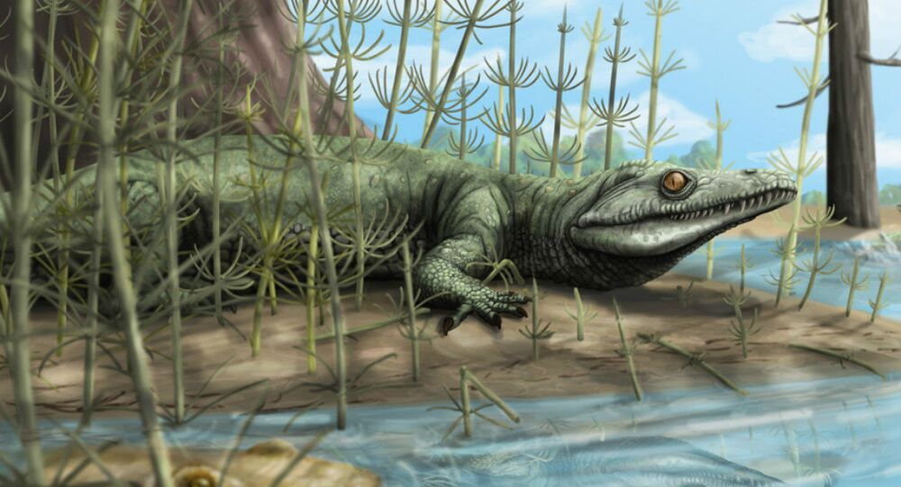 Palaeontologists discover 250 million year old new species of reptile in Brazil