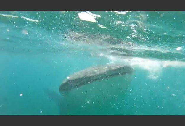 Girl Encounters Whale Shark