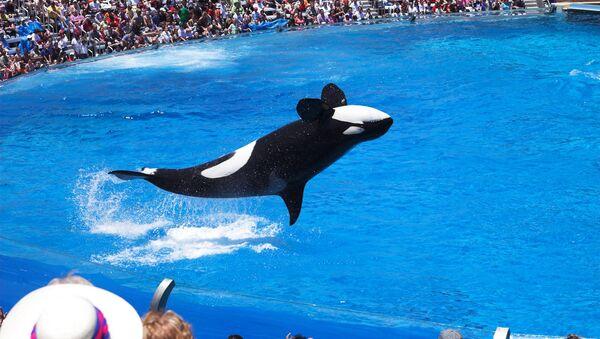 The End of Shamu: Animal Rights Activists Hail Huge Victory in Sea World Row - Sputnik International