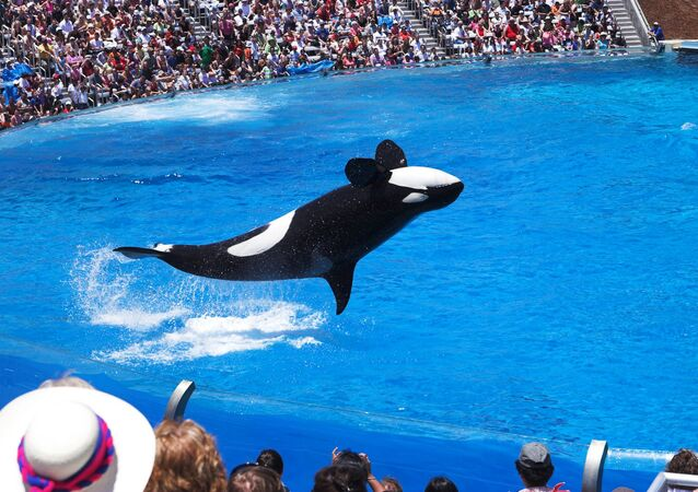 The End of Shamu: Animal Rights Activists Hail Huge Victory in Sea World Row
