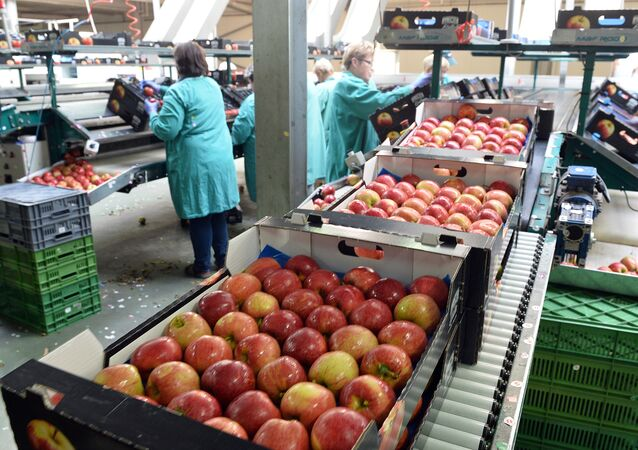 Apples are packed in a Polish fruit factory Rajpol in Wola Leczyszycka