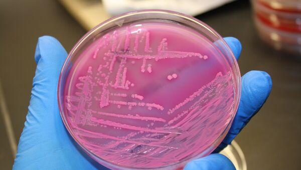 E. coli bacteria - Sputnik International