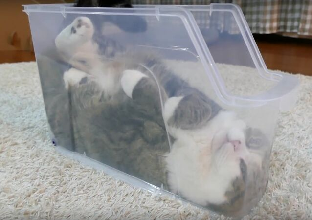 Cat chooses an odd place to relax
