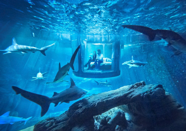 Sleep With the Fishes? You Can, Thanks to the Paris Aquarium and Airbnb!