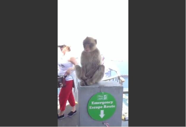 Hungry Monkey Steals Banana from Woman