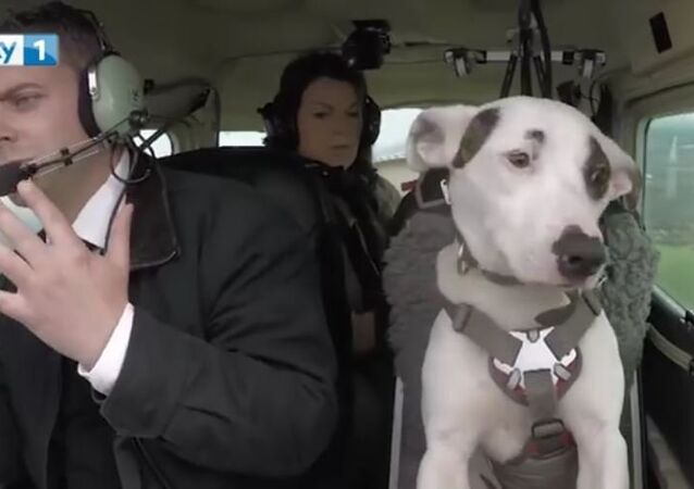 Mark Vette & His Team Teach Dogs To Fly