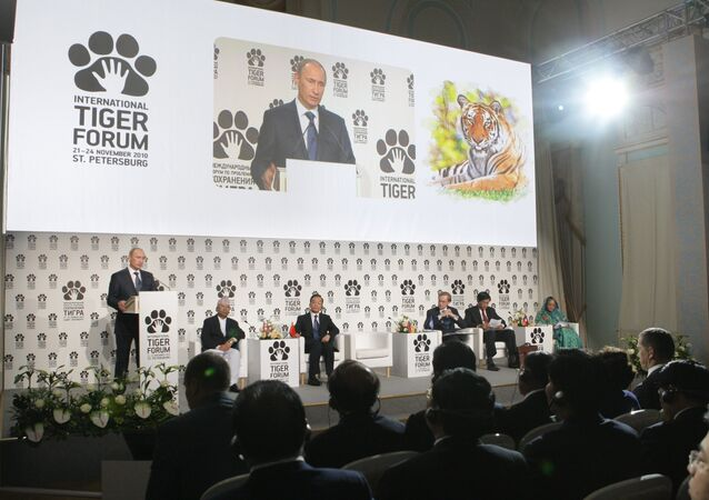Prime Minister Vladimir Putin (left, foreground) speaking at the International Tiger Conservation Forum, November 23, 2010. (File)
