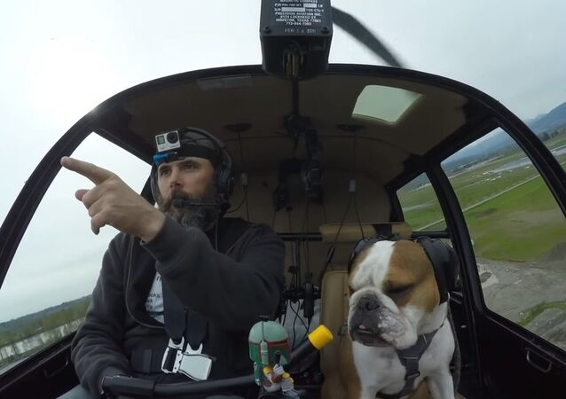 Dog is my co-pilot. Seagulls are my enemy.