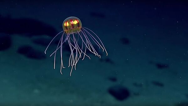 Jellyfish: April 24, 2016 - Sputnik International