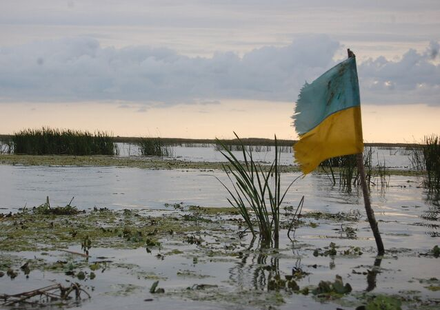 Swamp in Ukraine
