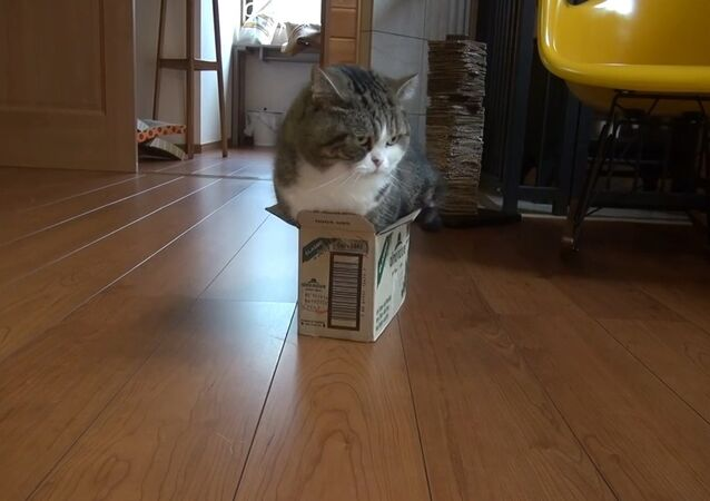 Too small box and Maru
