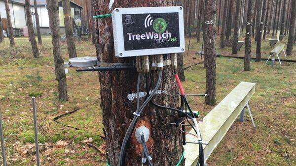 TreeWatch - Sputnik International