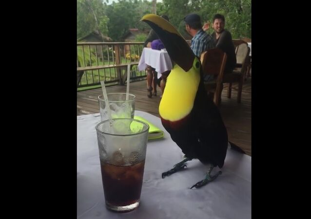 Sitting at a table with a Coca Cola drinking Toucan