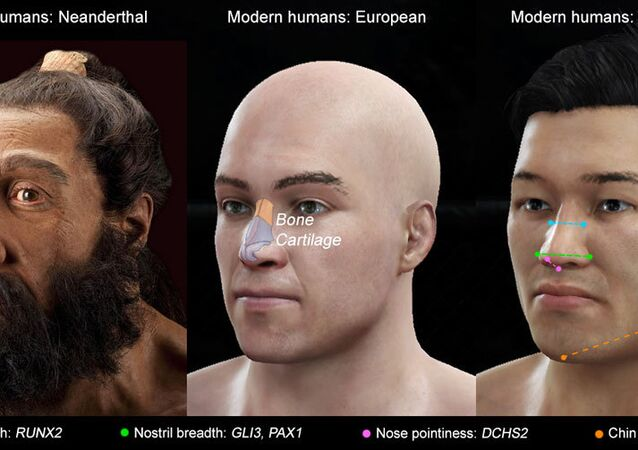 Image showing variation between nose shape and the specific genes responsible.