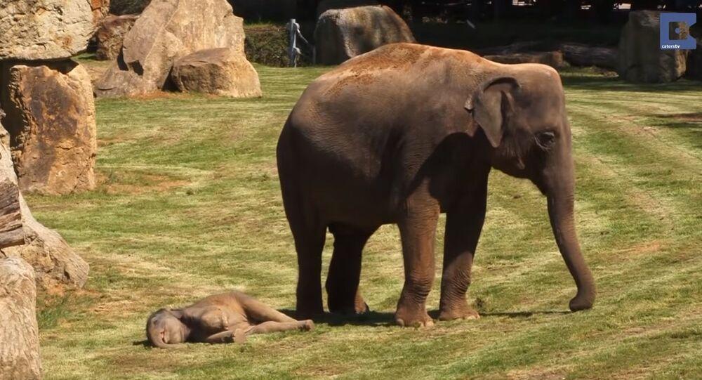 Mother Elephant and Her Sleepy Baby