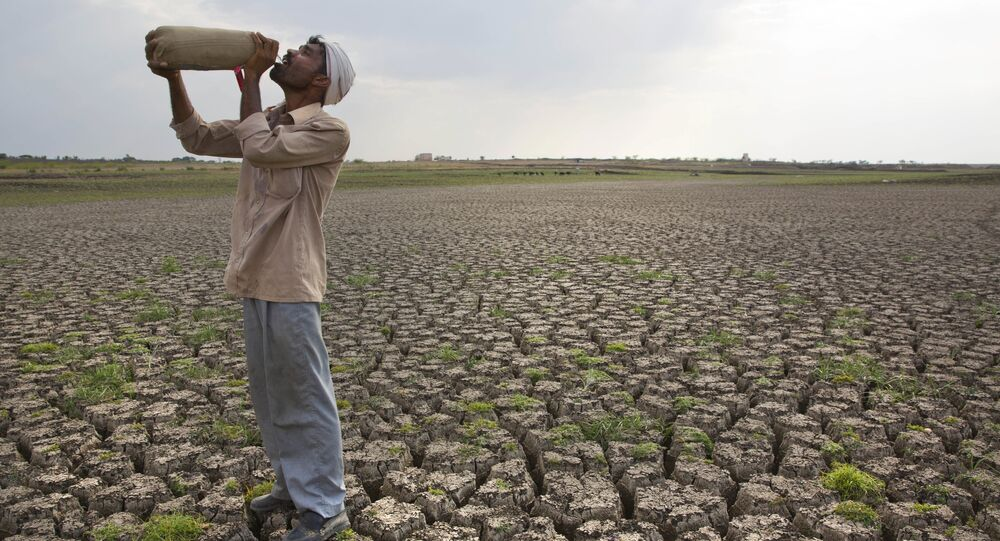 Shepard drinks water on the dry bed of Manjara Dam, which supplies water to Latur and nearby villages in Marathwada region, in the Indian state of Maharashtra. (File)