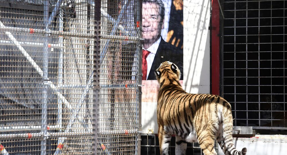 A tiger stands by a poster featuring German president Joachim Gauck during an action by activists of the Center for political beauty (Zentrum fuer Politische Schoenheit) at a socalled arena installed outside the Maxim Gorki Theater in Berlin, on June 16, 2016 as part of their campaign 'Eat Refugees' claiming for the asylum rights of refugees