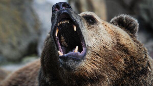 A bear - Sputnik International