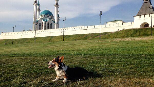 Pastushok on the background Kazan Kremlin - Sputnik International
