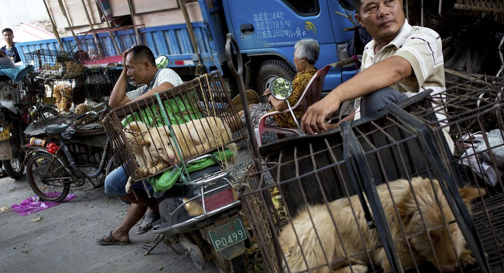 Vendors wait for buyers next to the dogs in cages for sale at a market ahead of a dog meat festival in Yulin in south China's Guangxi Zhuang Autonomous Region