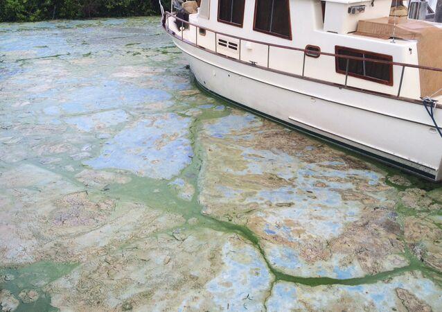 Florida Toxic Algae - July 2016