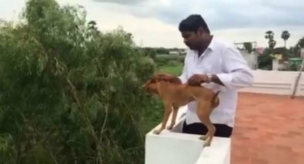 Man throws dog from his roof