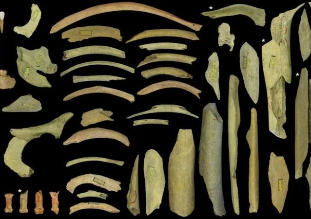 The highly fragmented Neanderthal collection of the third cave at Goyet represents at least five individuals. Dating indicates that the ones marked with an asterisk go back to between 40,500 and 45,500 years ago