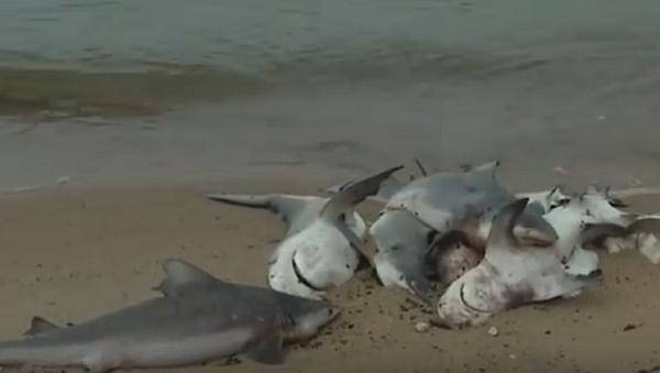 Dozens of Dead Sharks Wash Up on Alabama Beach - Sputnik International