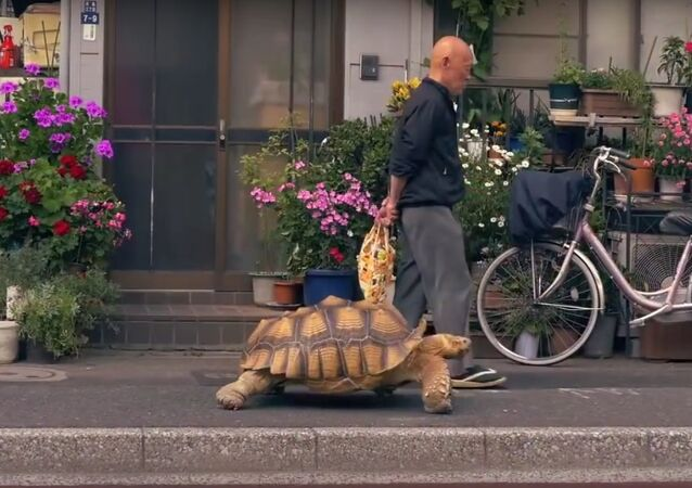 Taking his tortoise for a walk