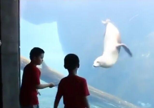 Sea lion 'plays catch' with boys through glass at aquarium