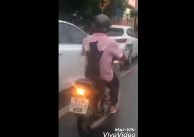 Cat riding on the back of a scooter