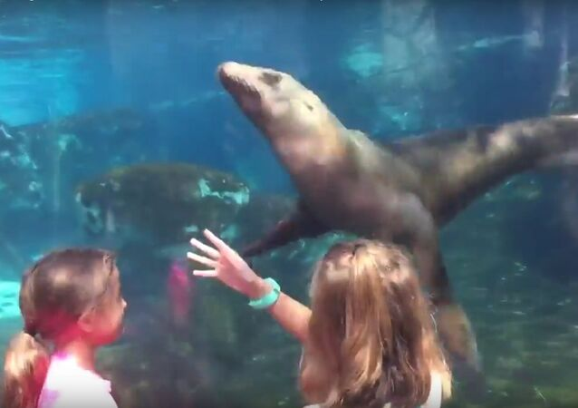 Alexis controlling a sea lions mind at the zoo the sea lion whisperer