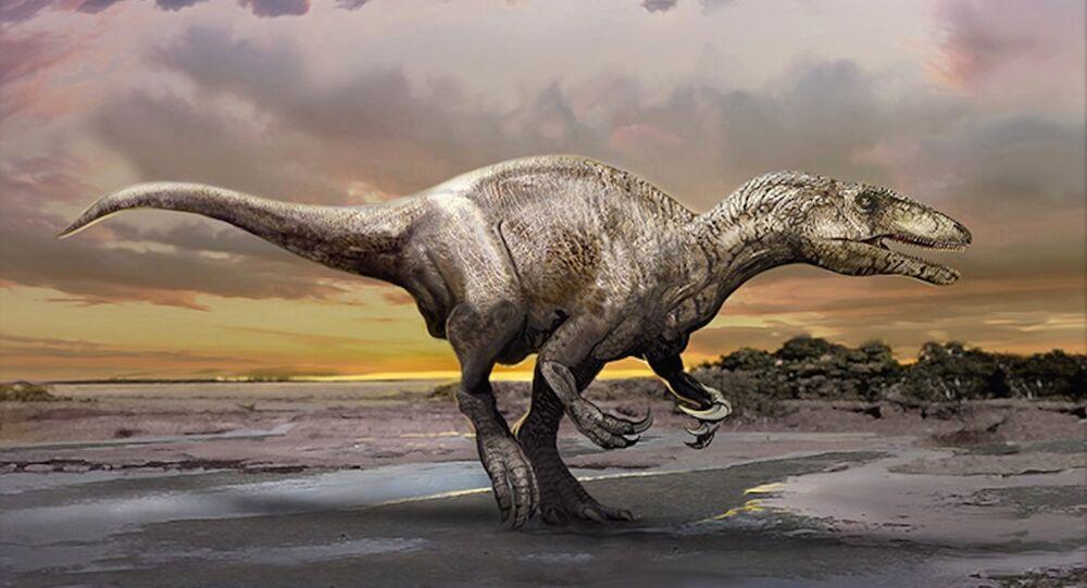 An artist's impression of a newly discovered dinosaur, Murusraptor barrosaensis.