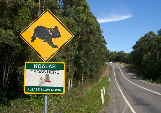 Koalas Cross