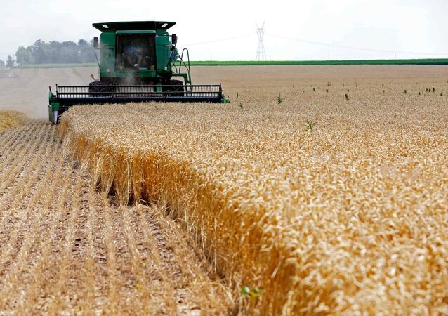 A combine drives over stalks of soft red winter wheat during the harvest on a farm in Dixon, Illinois (File)