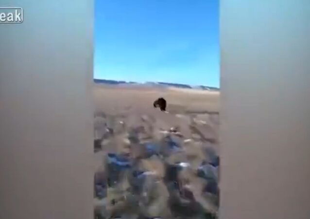 Driver fined for chasing bear