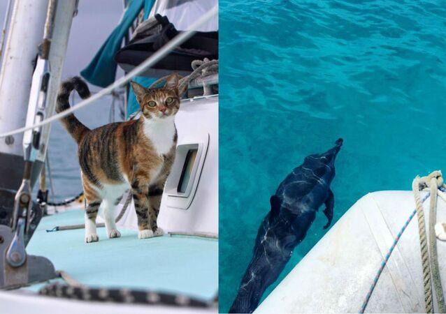 Amelia the seafaring cat