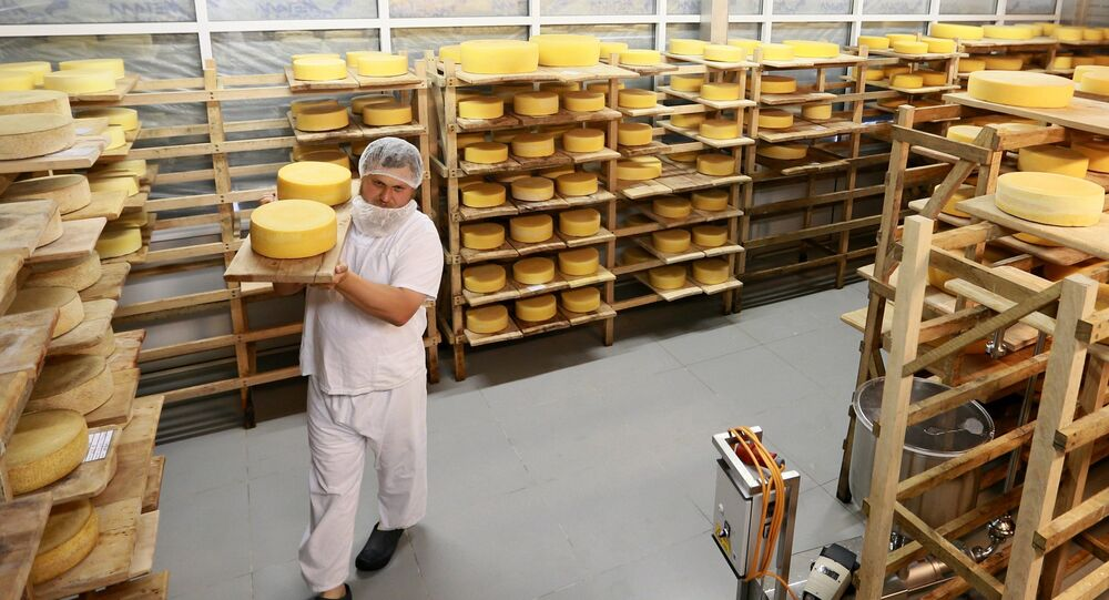 Farmer Oleg Sirota rearranges cheese blocks in the cheese ripening room at Russian Parmesan cheese dairy is Moscow Region's Istrinsky district