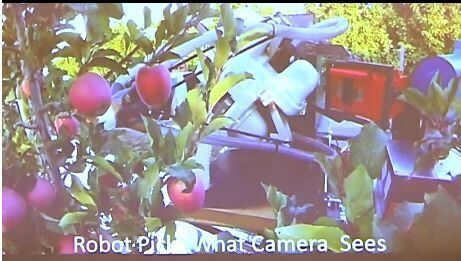 Apple picking robots headed for the farm