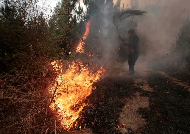 A man works to extinguish a forest fire in Arbo in the northwest Spanish region of Galicia, August 11, 2016