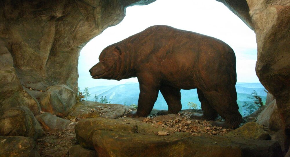 Image of a cave bear