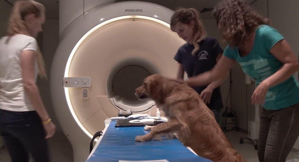 How dog brains process speech